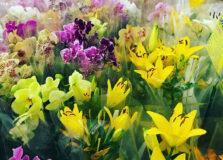 Shopping Bela Vista recebe exposição de Flores de Holambra